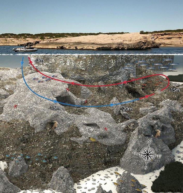 Dive Site Cap No No, Ibiza